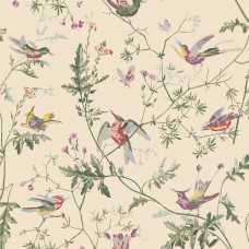 Cole and Son Archive Anthology Hummingbirds 100/14071 Wallpaper