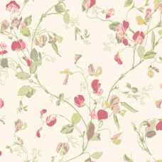 Cole and Son Archive Anthology Sweet Pea 100/6028 Wallpaper