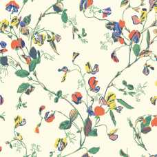 Cole and Son Botanical Sweet Pea 115/11032 Wallpaper