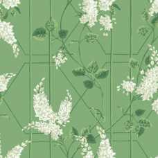Cole and Son Botanical Wisteria 115/5016 Wallpaper