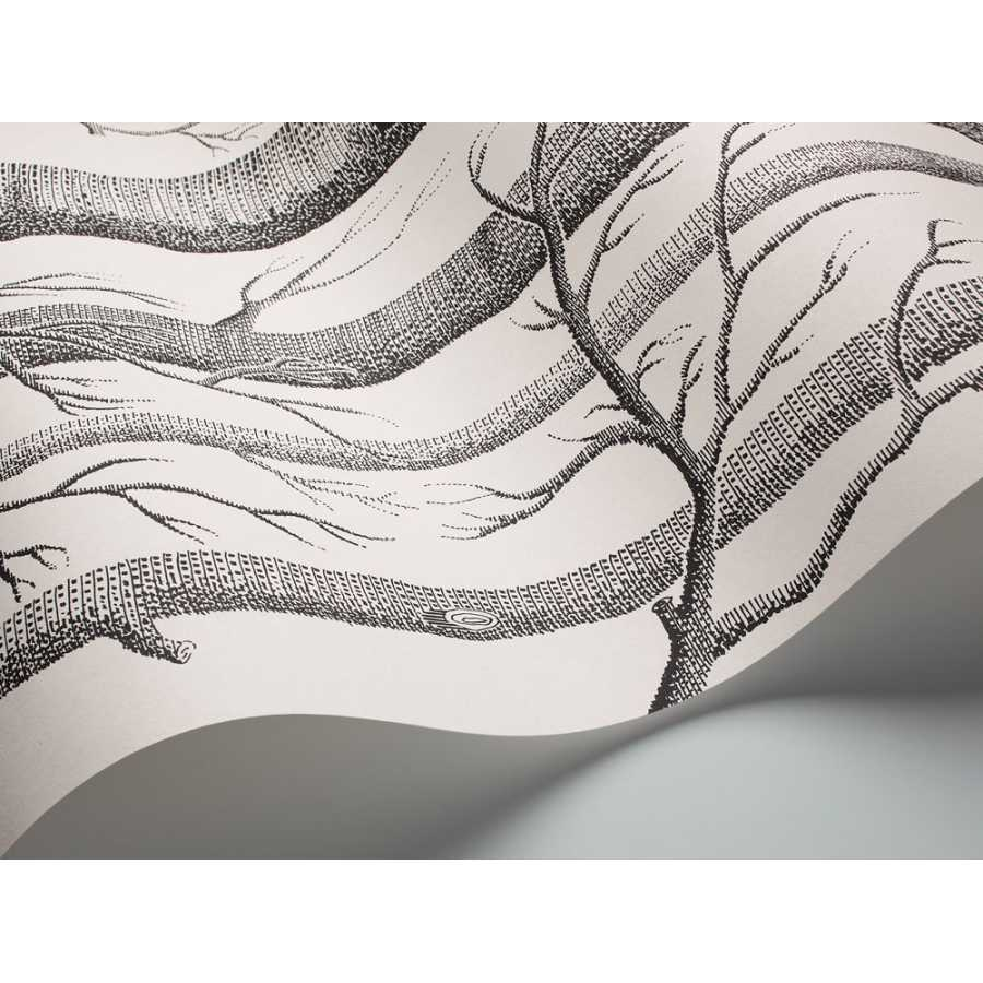 Cole and Son New Contemporary II Woods 69/12147 Wallpaper